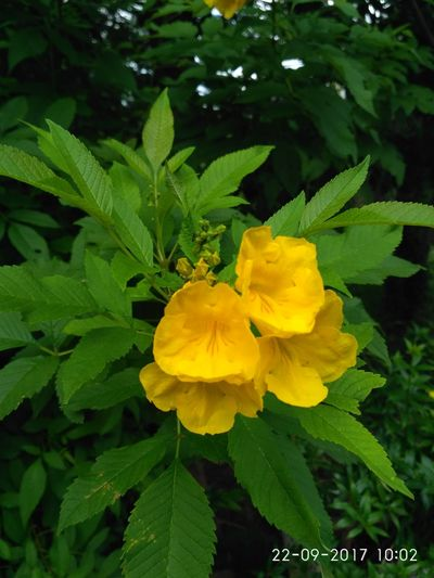 Flower Yellow Fragility Petal Flower Head Plant Freshness Nature Beauty In Nature Green Color Growth Close-up Leaf Outdoors No People Day Paint The Town Yellow