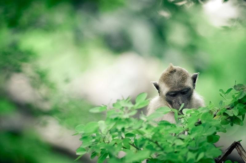 Close-up of monkeys on tree