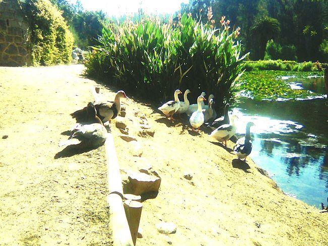 Serás libre como estos patos y ganzos algún día Natural Beauty Perfect Patosyganzos Sunlight Day Sand No People Outdoors Beach Nature EyeEmNewHere
