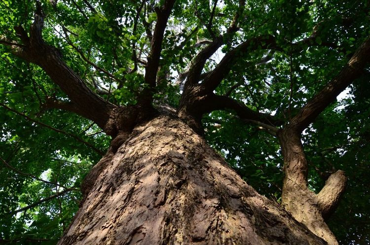 Trees Zeniarai Benzaiten Ugafuku Shrine
