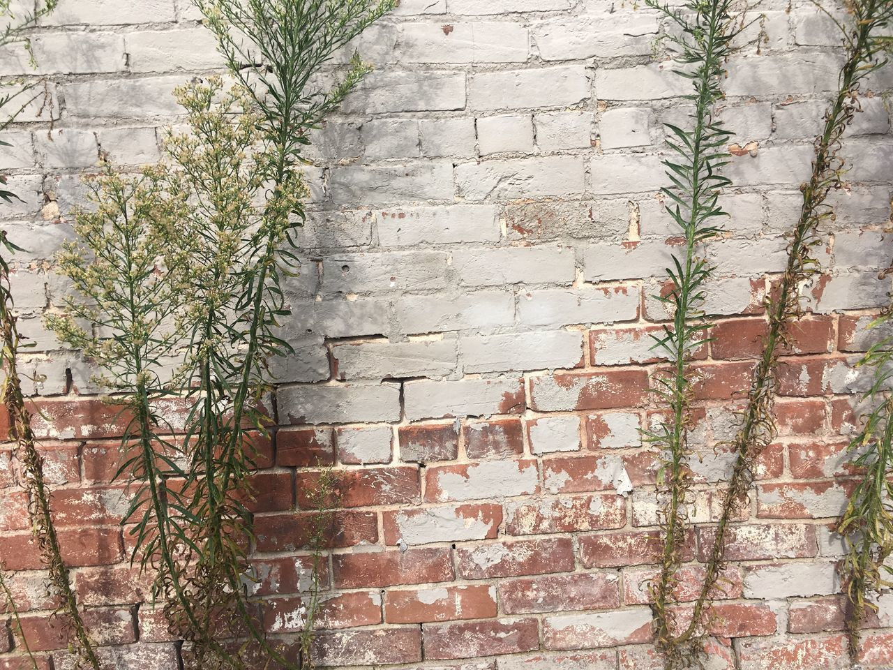 architecture, brick, brick wall, plant, built structure, wall, wall - building feature, building exterior, no people, day, building, outdoors, nature, growth, window, tree, low angle view, plant part, full frame, leaf