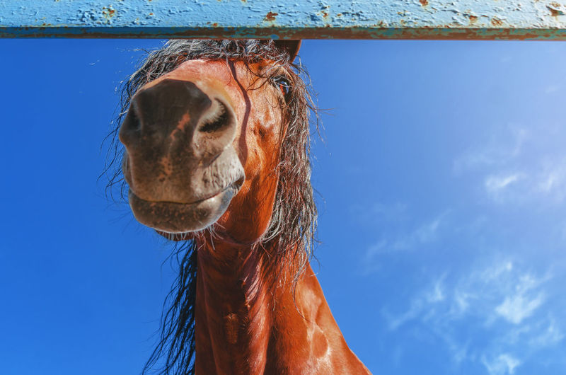 Cute horse, head, looking down at camera on background of blue sky.