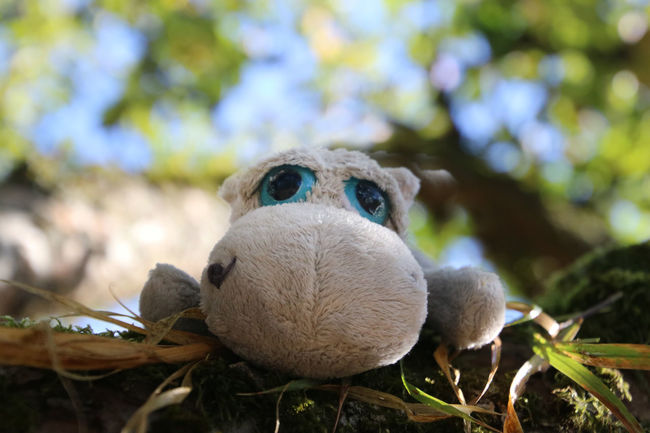 Close-up Nature Stuffed Toy Toy Plant Outdoors Selective Focus Leaf Plant Part Stuffed Hippo Toy In Nature