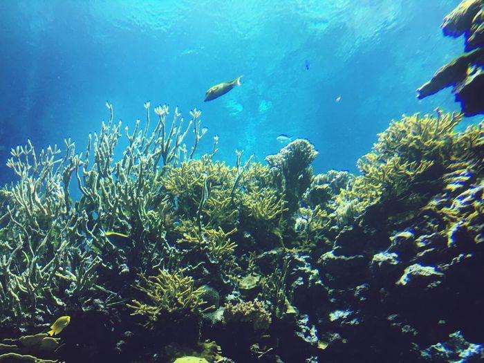 Underwater UnderSea Fish Sea Life Water Sea Nature