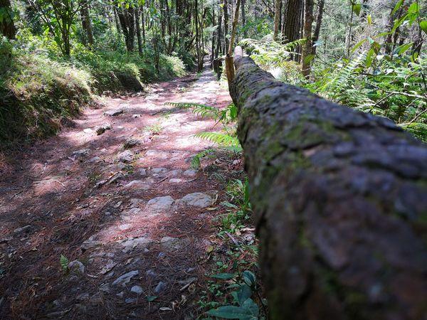 Foto Celular Tree Shadow Sunlight Grass Close-up Woods Growing