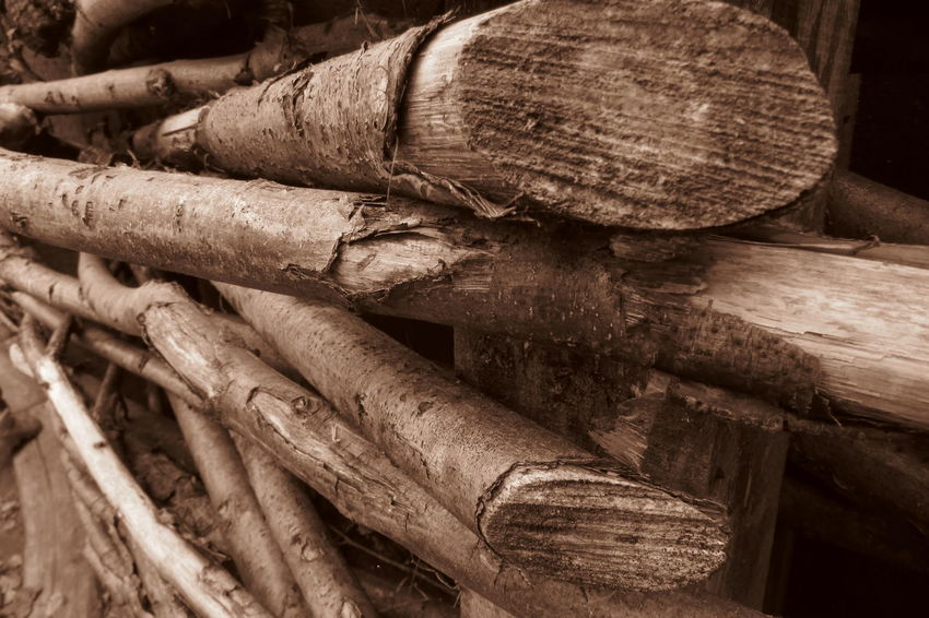 Bark Branches Textured  Wood Close Up Close-up Day Log Log Stack No People Outdoors Stack Tree Bark Texture Wall - Building Feature Wood - Material Wooden Post Wooden Posts Wooden Structure Wooden Texture Wooden Wall
