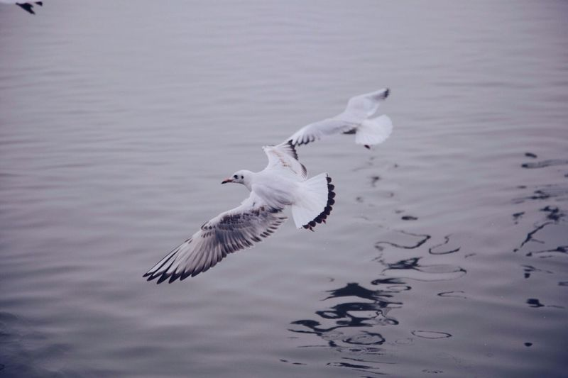 Close-up of birds flying over lake