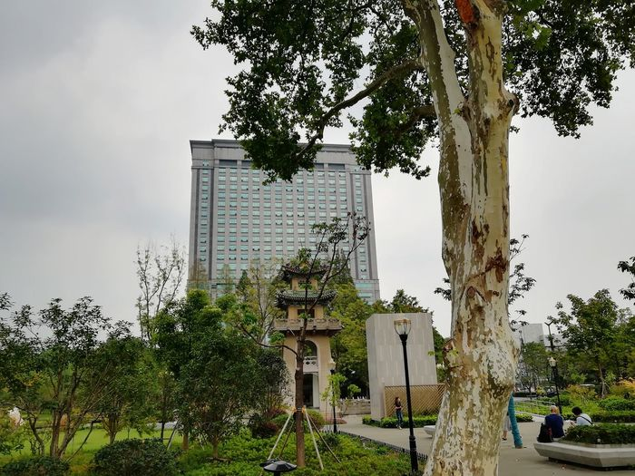ARMONÍA Chinese University Southeast University History And Modern Peaceful No Filter, No Edit, Just Photography Trees