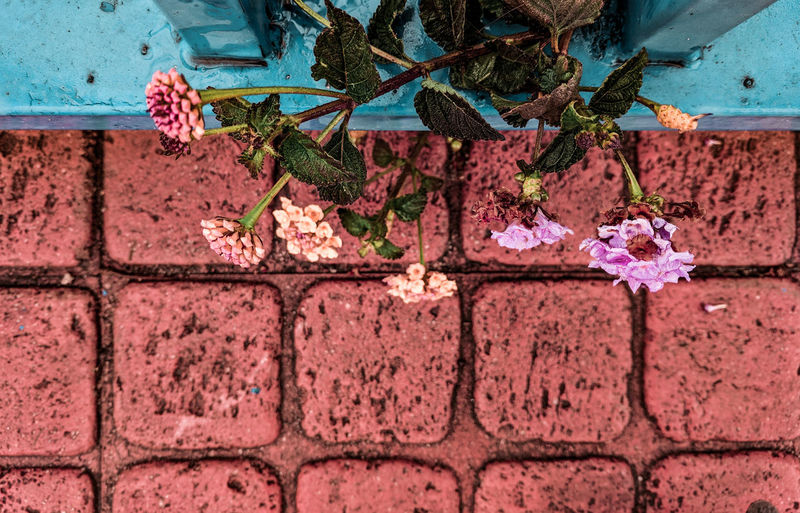 flowers by the pavement Pavement Ceramics Looking Down Flowering Bushes Mediterranean  Coral Colored Turquoise Pink Color Turquoise Colored Town Flower Brick Wall Architecture Close-up Building Exterior Built Structure Plant Creeper Creeper Plant Pink Overgrown Stem Wall Young Plant Flower Head Stalk Vine Peeling Off