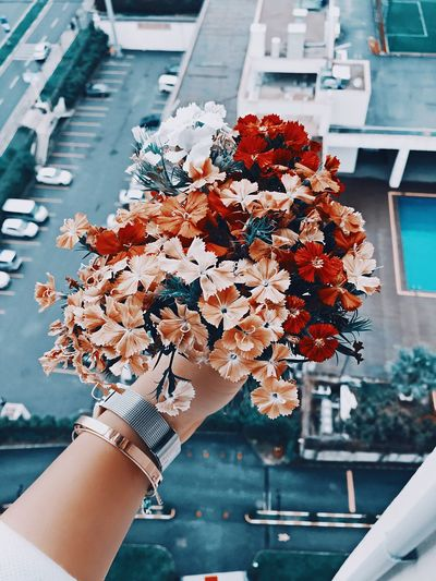 EyeEm Gallery EyeEm Nature Lover Flower Collection Beauty In Nature Day