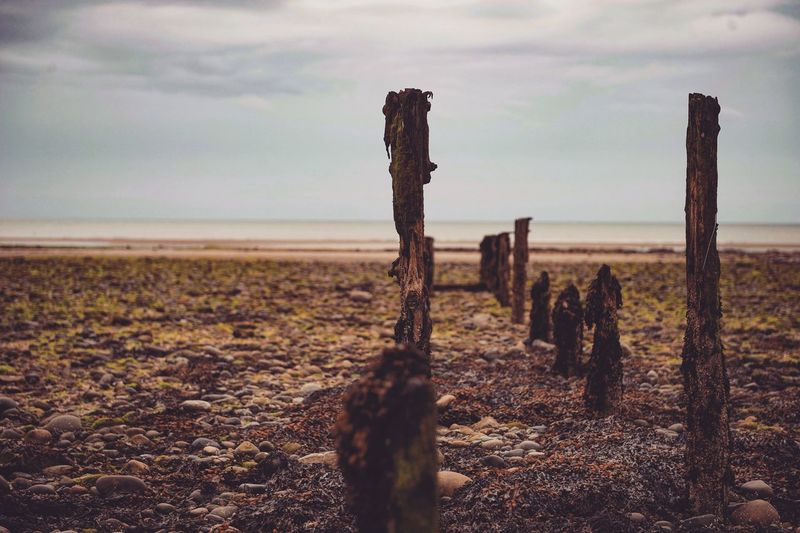 Damaged Wooden Posts At Beach Against Sky