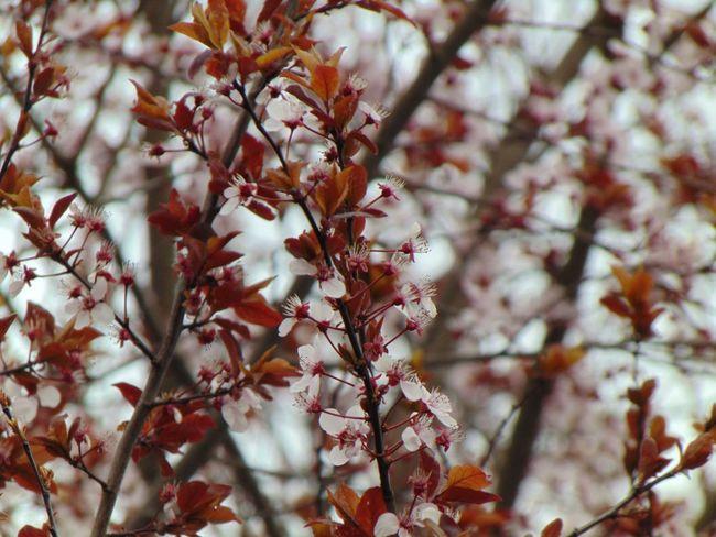 Dark Pink By Motorola EyeEm Nature Lover Nature Flowers Spring Flowers Spring Sun Light HDR City