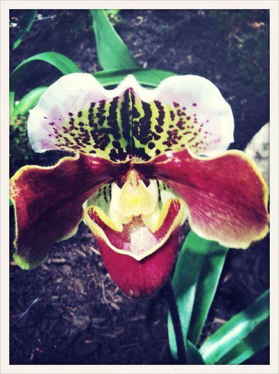 Orchid AMPt_community AMPt_ Community Flower Exhibition