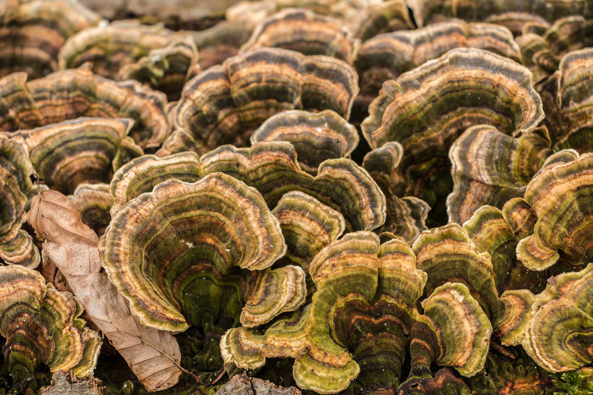 Mushrooms Abundance Animal Wildlife Backgrounds Close-up Day Focus On Foreground Food Food And Drink Full Frame Growth Healthy Eating Large Group Of Objects Mushroom Natural Pattern Nature No People Pattern Plant Shell Spiral Vegetable