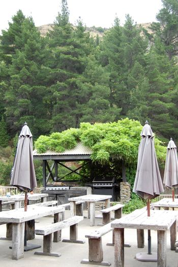 View from the restaurant above shotover river Greenery Tree Outdoors Growth Summer No People Day Nature Sky