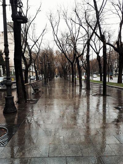 Rain Water Tree