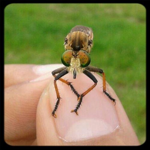 small thing Macro Small Thing Robberfly Nature Animal