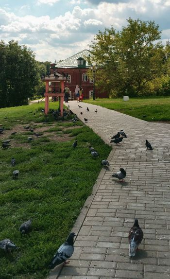 Pigeons perching on fountain in park