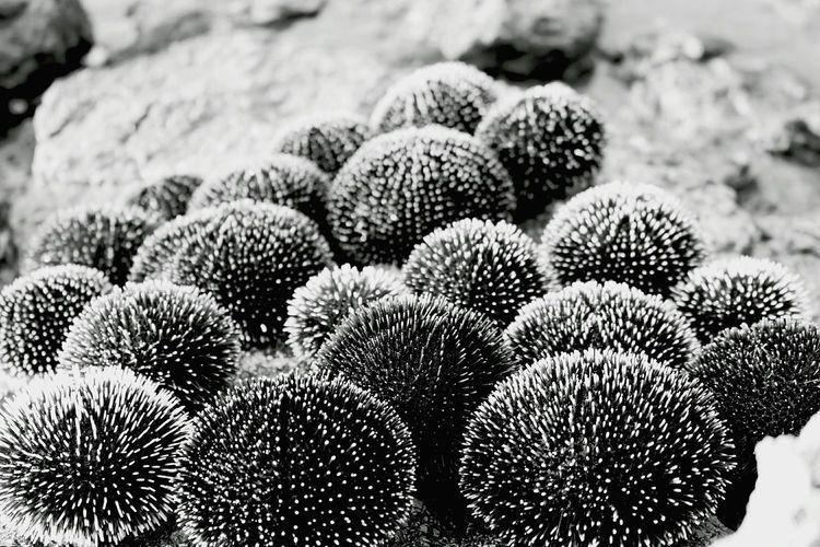 High angle view of cactus plants on land