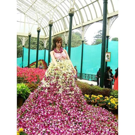 Flowers show !! @bangalore Flowers Eye4photography  EyeEm Best Shots Flowers To The World Checkthisout OpenEdit Mycollection Bangalore Bengaluru EeYem Best Shots Checkthisout! Bangalorediaries Bangalore India Popular Nature_collection