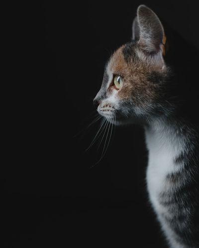 One Animal