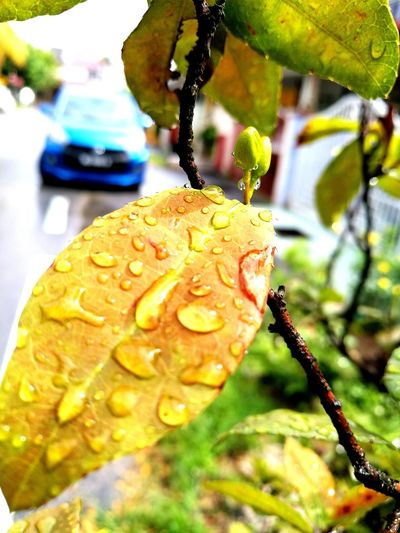 Close-up Wet Leaves Outdoors Beauty In Nature No People Nature Leaves🌿 Leaves_collection Leaves And Branches Freshleaves Wetmorning