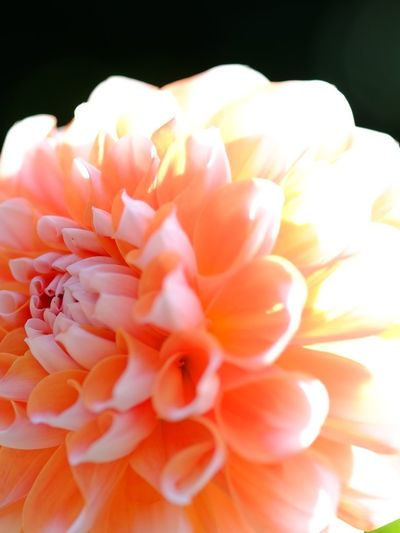 Flower Natural EyeEm Nature Lover Naturelovers Nature_collection Nature Flowers Daria Pink Pink Flower