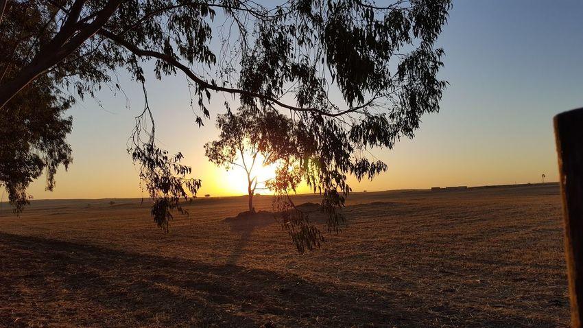 #Sunrise #alentejo #eyembestshot Landscape Nature Outdoors Tree