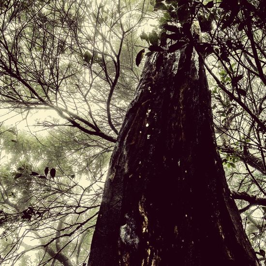 A Tall Tree Vintage Network Beautiful Branches Best Moment