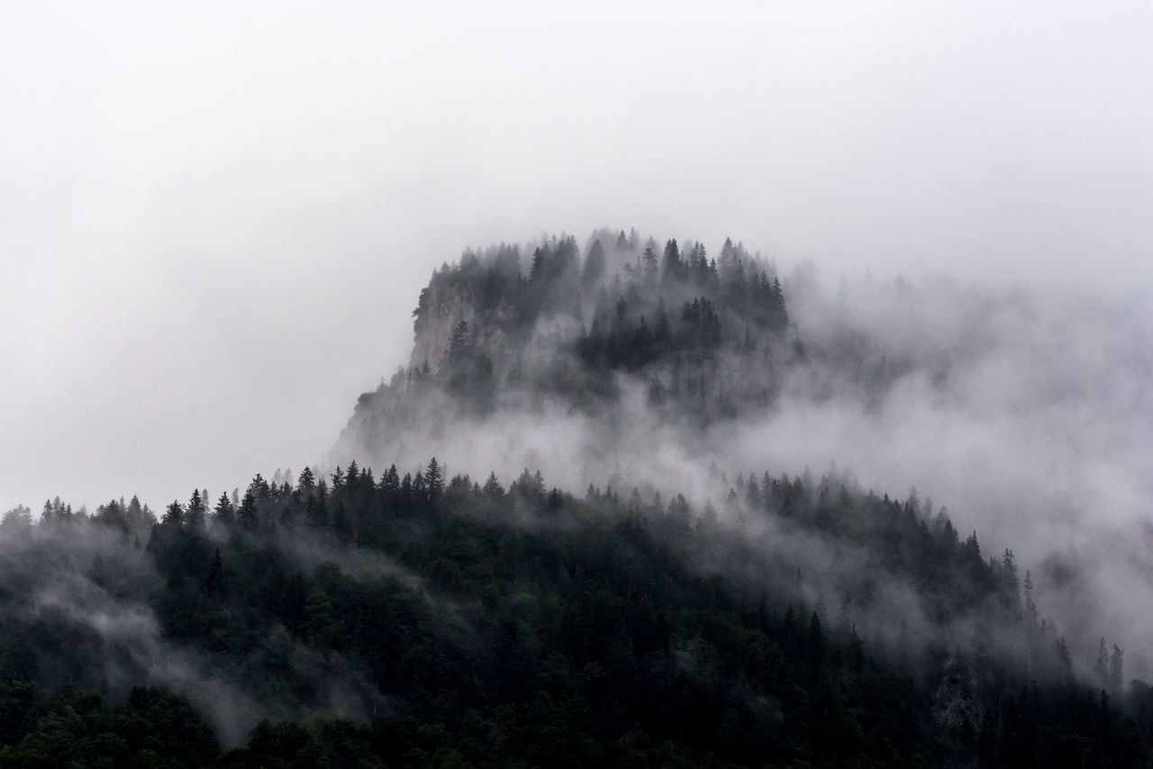 LOW ANGLE VIEW OF TREES ON MOUNTAIN IN FOGGY WEATHER