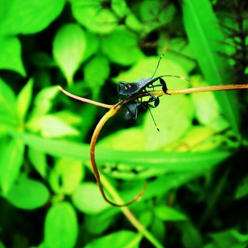 Hanging out with nature :) Matinginsects Insectsofinstagram Insectscomp Insects  Insects_perfection Insects_macro Mating Green Texture Yellow Black Naturelover Nature Greenary Globaldaily Nothingisordinary_ Nothingisordinary Golden_click Weird Squeamish