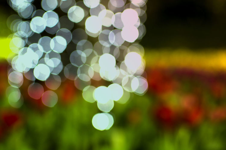 Bokeh of light and blurry defocused flower garden background Defocused No People Night Circle Decoration Glowing Shape Abstract Lighting Equipment Celebration Plant Light Outdoors Blurred Bokeh Nature Garden Festival Backyard Chistmas