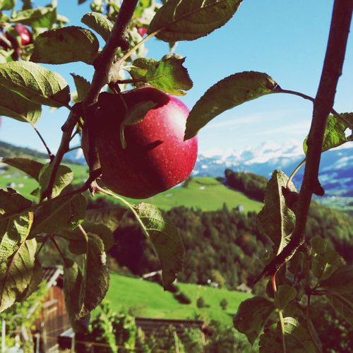 a lonley apple with a amazing view