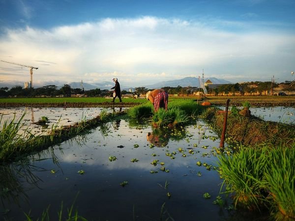 Seeding time Water Reflection Sky Cloud - Sky Rice Paddy Farmland Agricultural Field Cultivated Land Farm