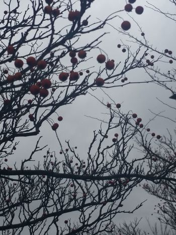 Nature Photography Nature_collection Grey Sky Branch With Berries Berries