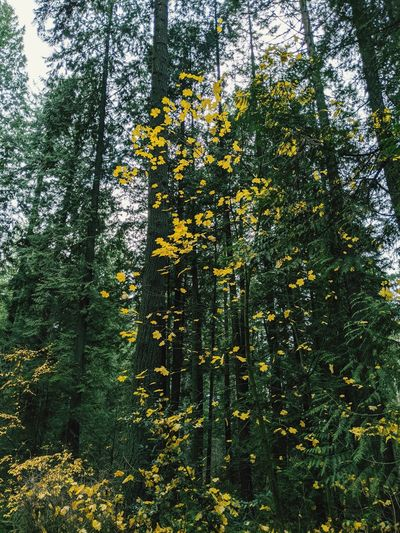 View of flowering trees in forest