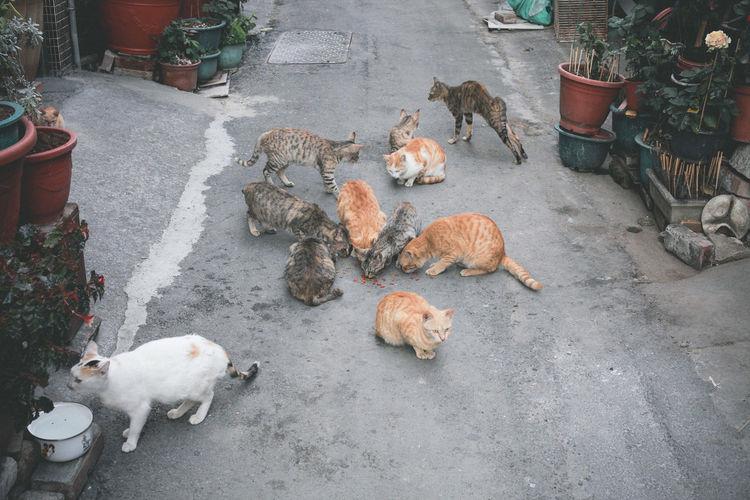 😺😸😻😽😼🙀😿😹😾 Cat Cats Photography EyeEm VSCO Cam Photos Vscocam Photoshoot Enjoying Life Hi!