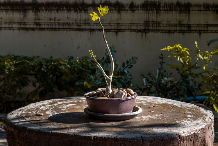Close-up of potted plant in pot against wall