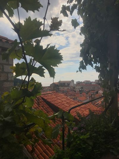 The cutest tiny restaurant in Dubrovnik. Lady Pi-Pi Tree Architecture Dubrovnik Croatia Travels Food restaurant Growth Roof No People Leaf Nature Outdoors Sky Beauty In Nature Day Tiled Roof  First Eyeem Photo