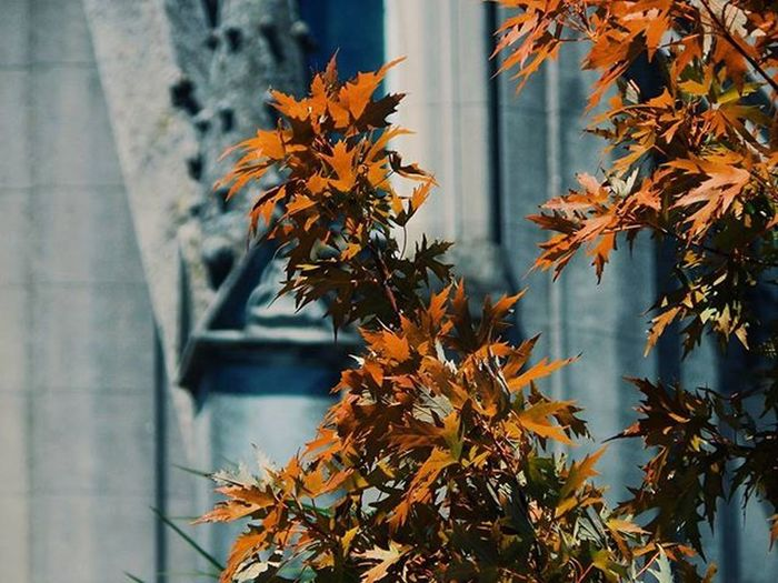 A little bit of drama -Mañana en el Prado V- Church Churches Iglesia Gotico Gothic Gothicart GothicStyle Gothicarchitecture Arquitectura Architecture ArquitecturaGotica Architecturephotography Iglesiasdelmundo Art Amazing Oldneiborhood Audiovisualuruguay Barriosdemdeo Uruguayst_america2 Uruguay_estrella Igersuruguay Igersoftheday Nofilter Amateur Photography Amateurs_shot nikonphotography nikonistas art_camera
