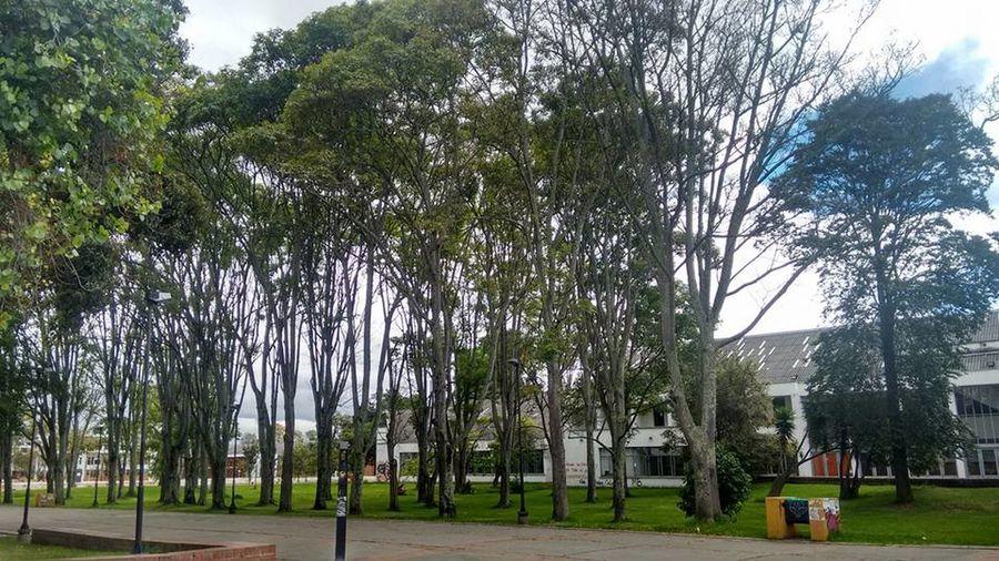 Bogota,colombia. University University Campus Universidad Universidad Nacional De Colombia UniversidadNacionaldeColombia Arboles , Naturaleza
