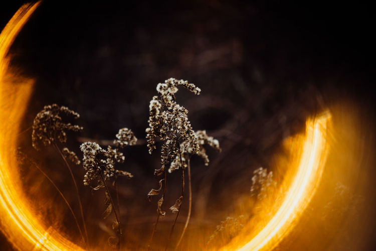 No People Close-up Nature Wellbeing Mineral Freshness Burning Ring Of Fire Outdoors Nature Nature Photography Winter Orange Color Weed