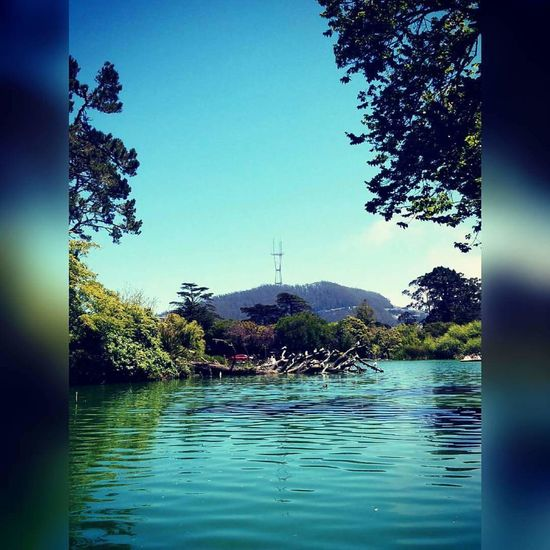 Stow Lake Goldengatepark Sutrotower Lakes  View From Below Sanfrancisco ILOVESF Naturesbeauty Birds Relaxing