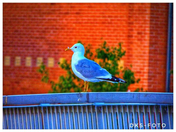 Sweden The True Story Bird Perching Blue Full Length Animal Themes Close-up