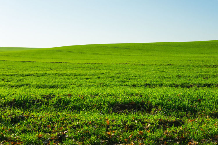 Landscape Sky Environment Plant Green Color Land Beauty In Nature Field Tranquility Grass Tranquil Scene Nature Scenics - Nature Clear Sky Horizon Rural Scene Horizon Over Land Growth No People Non-urban Scene Rolling Landscape