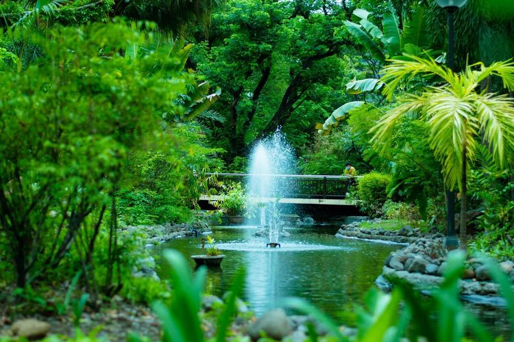 An oasis in the middle of the city Oasis Green Greenery Scenery Nature Colors Eye4photography  Eyeem Philippines Through The Lens Wonderful World Beautiful Nature Colour Of Life