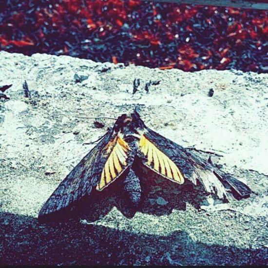 Bichos estranhamente bonitos Borboletas Inseto Nature Natureza Bela🌳 Bug Butterfly