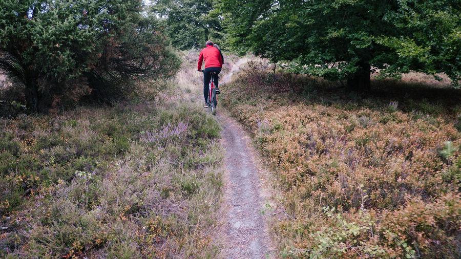 Radtour in der Lüneburger Heide Draußen Feld Lüneburger Heide MTB Forest Heide Hike Lower Saxony Mountain Mountainbike Niedersachsen Wald Wandern