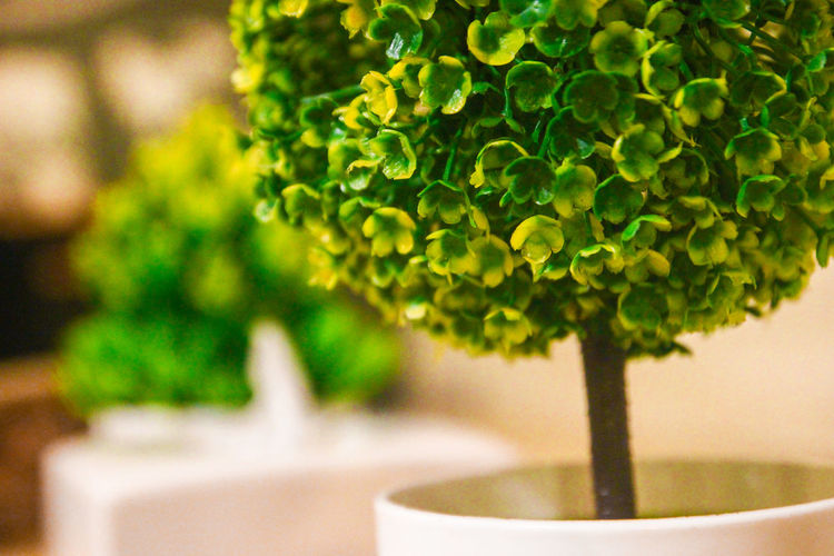 Close-up of fresh green plant in pot