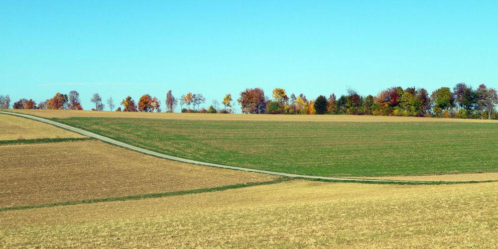 Landscape in